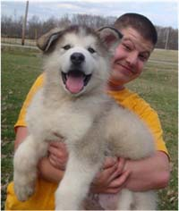 Hudson's Malamutes - Alex with Hudsons Alaskan Malamute puppies