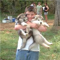 Hudson's Malamutes - Alex with Nyga puppies at the movie Sparkle and Tooter
