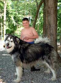 Hudons Malamutes - Alex with Sumo