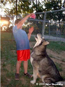 Hudons Malamutes - Alex with Ursa