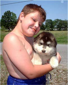 Hudons Malamutes - Alex with Sonomas Boy