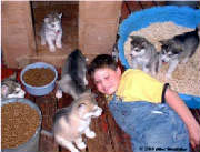 Hudons Malamutes - Alex with Rubys puppies