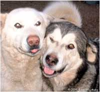 Hudsons Malamutes - Utana with the love of her life Takoma